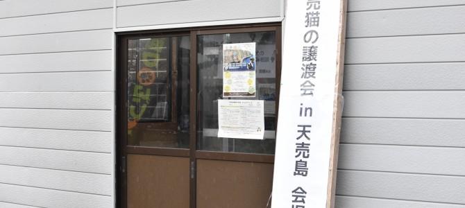 天売猫の譲渡会 in 天売島