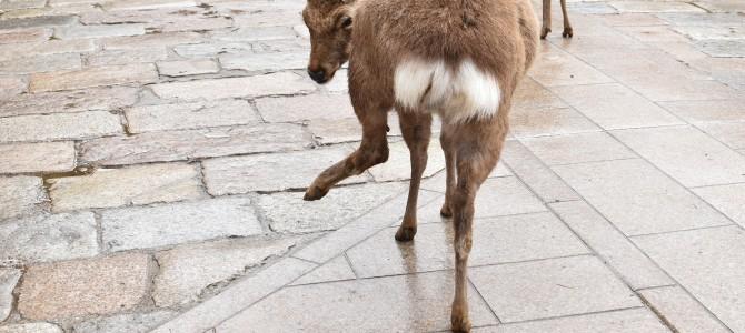 人生二度目の奈良の旅 〜きっぷの購入と奈良公園から〜
