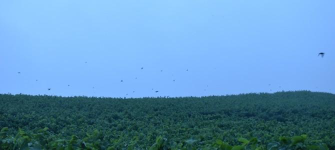北海道の離島「天売島」で海鳥観察