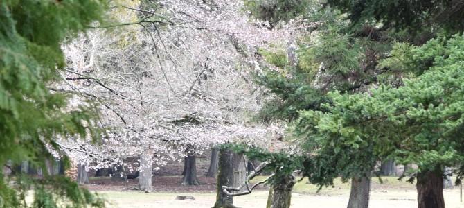 人生二度目の奈良の旅 〜二月堂と東大寺裏講堂跡〜