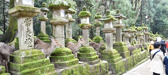 人生二度目の奈良の旅 〜春日大社と興福寺〜