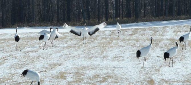 道東の冬を楽しむ!自然も人も食べ物も!(3)
